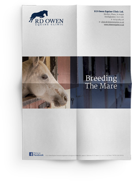 breeding a mare