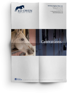 Equine Castrations