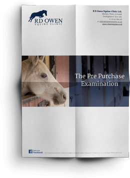 Equine pre purchase examinations